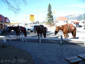 Equine Rangers