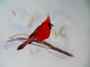 Cardinal_photo