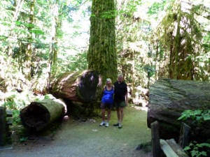 Cathedral Grove4